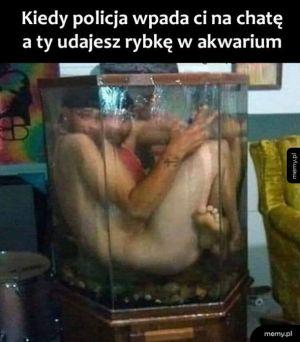Jestem rybką