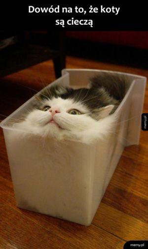 Stan skupienia kota