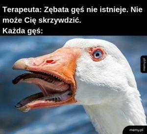 Szczeki