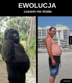 Polakus Sapiens