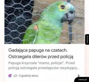 Gadająca papuga