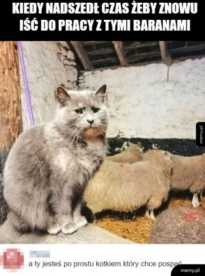 Ciężkie życie kotka