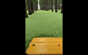 Niesamowity las