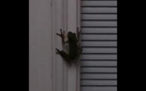 Co się stanie kiedy żaba połknie świetlika