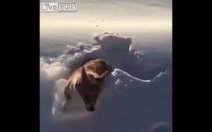Szaleniec wyrzuca psa z samolotu