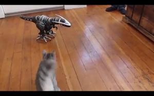 Raptor vs. kot
