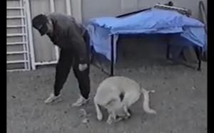 Jedna noga nie chciała iść na spacer