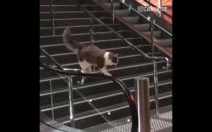 Dokąd zmierzasz koteczku?