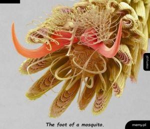 Stopa komara