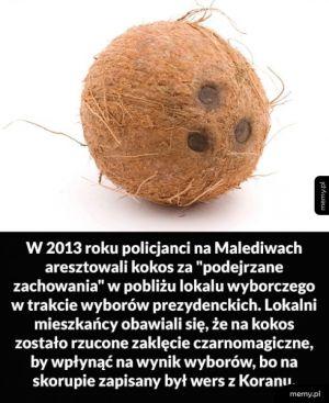 Podejrzany kokos