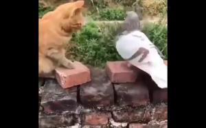 Kot i gołąb.