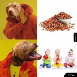 Typowy pitbull