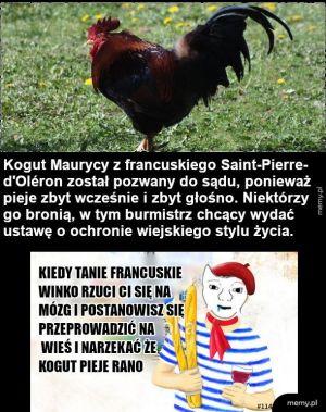 Francuzi tacy logiczni