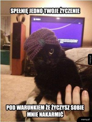 Kot czarodziej