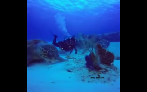 Największy żółw na świecie