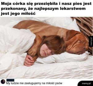 Miłość zwierząt
