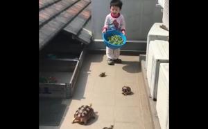 Zaklinacz żółwi
