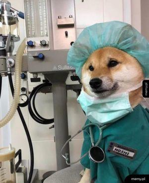 Pieseł lekarz