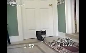 Dziwny ten kotek