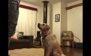 Reakcja psa na nowego pupila