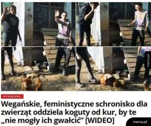 Co te feministki