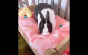 Szczęśliwy króliczek