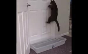 Ten kot kocha wyzwania