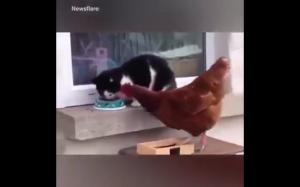 Ej, zostaw moje jedzenie!
