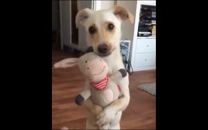 Jego ulubiona zabawka
