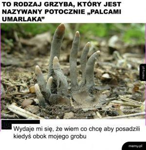 Ciekawy grzyb