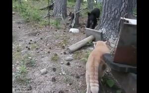 Kot versus niedźwiadek