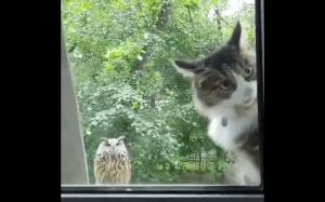Hej człowieku, wpuść mnie!