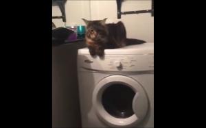 Masaż na pralce