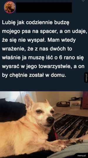 Pies aktor