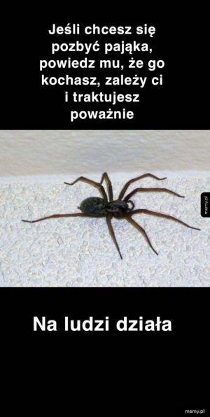 Metoda na pająka
