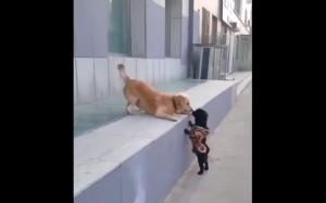 Smol doggy kiss