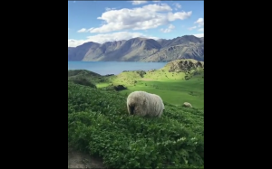 Piękna Nowa Zelandia