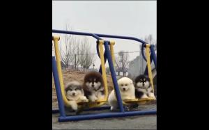 Psi gang