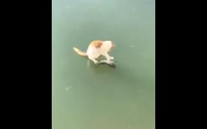 Kot próbuje złapać rybę