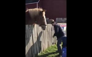 Karmienie konia