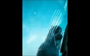 Gigantyczny miś polarny