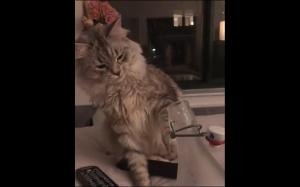Ekspresyjny kot