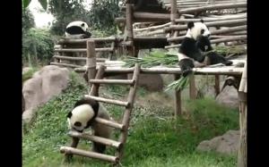 Idź do domu pando, jesteś pijany