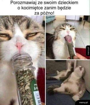 Narkotyki straszna sprawa