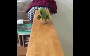 Groźna papuga