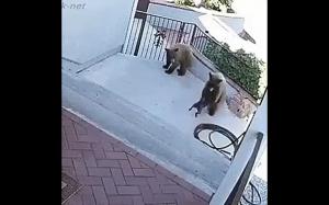 Pies vs niedźwiedź