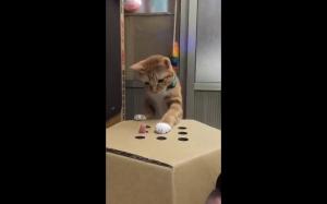 """Kot gra w """"gdzie jest palec"""""""