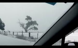 Kangury w australijskim śniegu