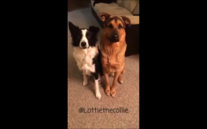Kto jest twoim najlepszym przyjacielem?