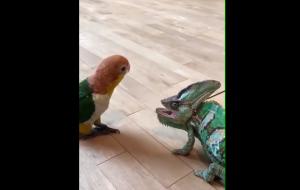 Pocałunek dinozaura
